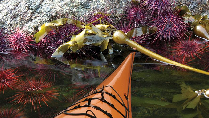 Sea-Kayak-Daytrip-7